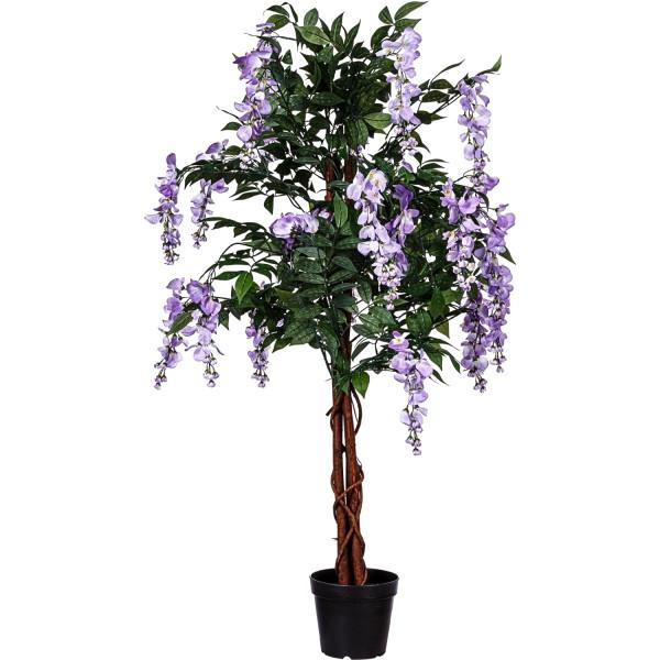 PLANTASIA® Wisteria Blauregen, 120cm, Violette Blumen